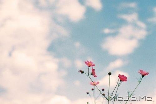 晚安心语:哭泣时没有肩膀依靠,那就仰起头 (3)